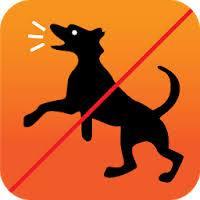 تحميل Dog TV APK للاندرويد آخر اصدار 2021